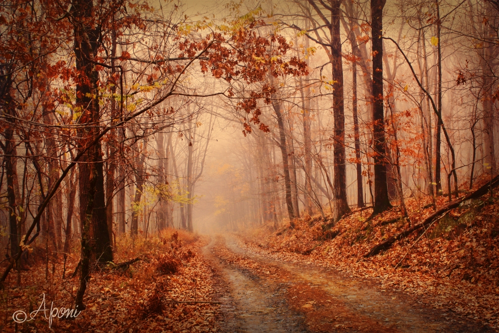 autumn-fog-sample.jpg