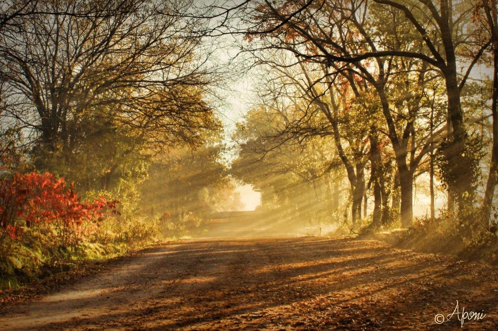 morning-rays